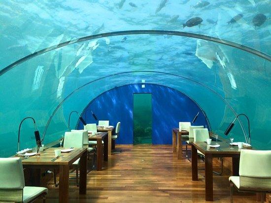 Ithaa Undersea Restaurant: photo0.jpg