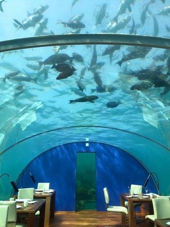 Ithaa Undersea Restaurant: photo1.jpg