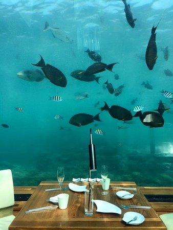 Ithaa Undersea Restaurant: photo2.jpg