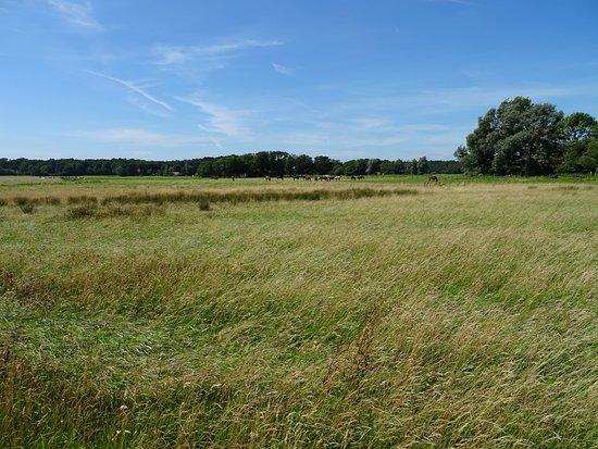 Boswachterij Westerschouwen: grasland aan de rand van de Boswachterij