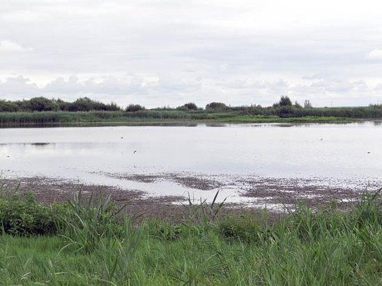 Vogelreservaat Polder IJdoorn