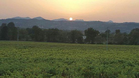Azienda Agricola Meoli