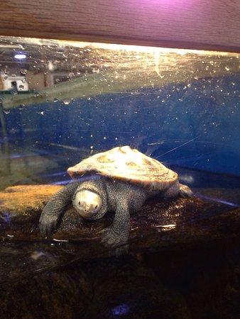 Woods Hole Aquarium: photo0.jpg