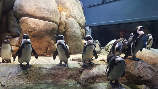 Greensboro, NC: Penguin feeding time!