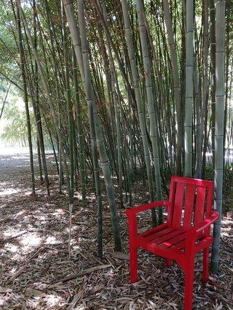 Bambous en provence eyragues 2018 ce qu 39 il faut savoir for Savoir composer un beau jardin