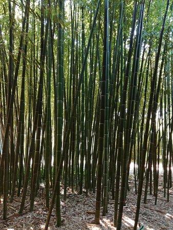 Un beau jardin de bambous arbres et fleurs picture of for Beaux arbres de jardin