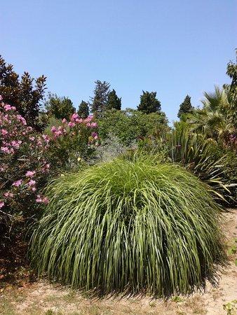 un beau jardin de bambous arbres et fleurs picture of