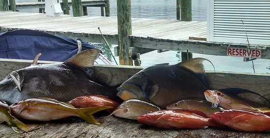 Abaco Beach Resort and Boat Harbour Marina: FIsh on! clean it in their marina.