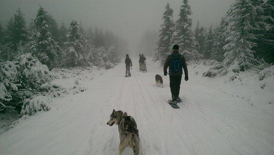 Teplice, Republik Ceko: Dog-Trekking