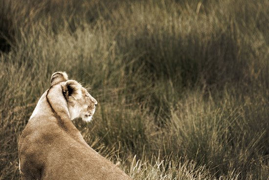 Safaris-R-Us - Day Tours: Smelling her dinner