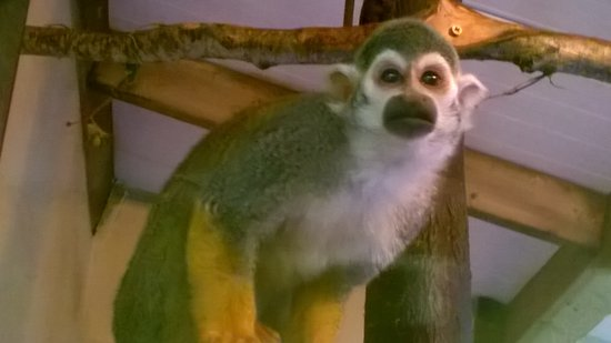 The Lake District Wildlife Park: up close to a small monkey