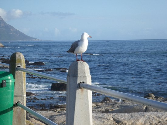 Bantry Bay, Sør-Afrika: 3 minutes from the hotel