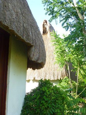 Complexe Munha Uxmal : Huttes d'habitation