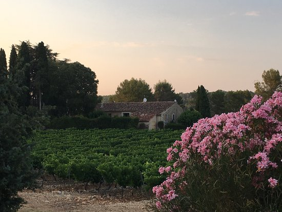Château L'Arnaude : The lovely ancient building, formerly inhabited by monks, is beautifully nestled in the vinyard.