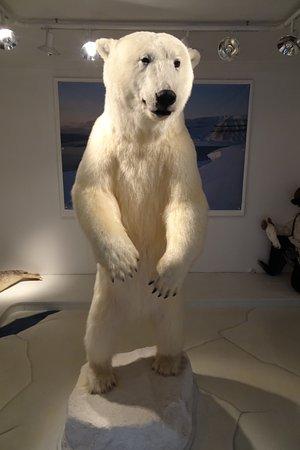 Polar Museum Andenes Photo