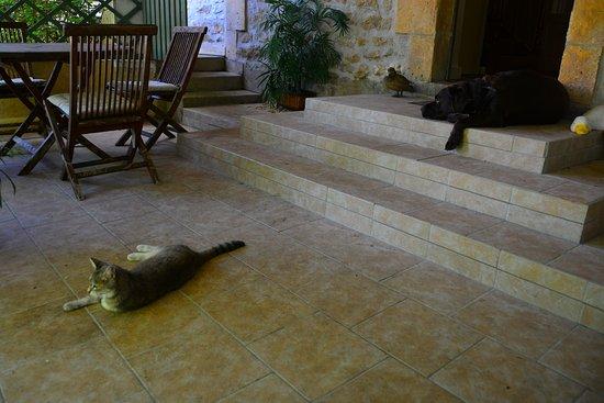Le Jardin Sarlat: Gedeckte Veranda im Eingangsbereich mit der Katze und dem Hund.