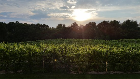 Buchanan, MI: Sun over the vineyards after the storm. View from the deck.