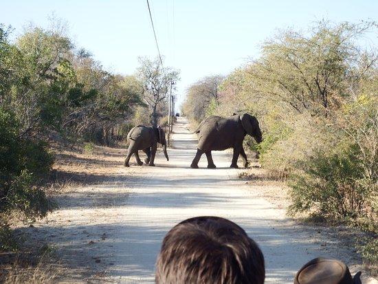 Shiduli Private Game Lodge: Elefantes na estradinha