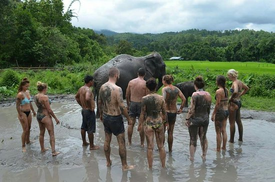 Shower Together Picture Of Dumbo Elephant Spa Chiang Mai