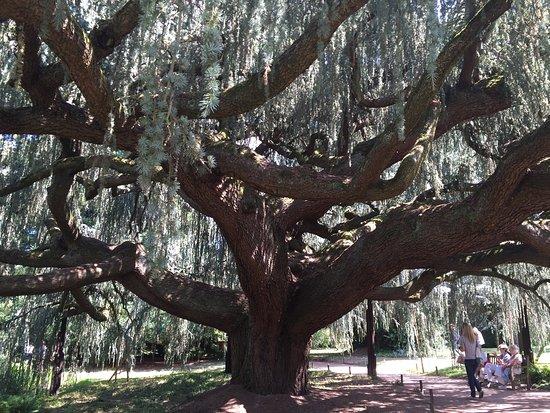 Chatenay-Malabry, ฝรั่งเศส: Arboretum de la Vallée-aux-Loups