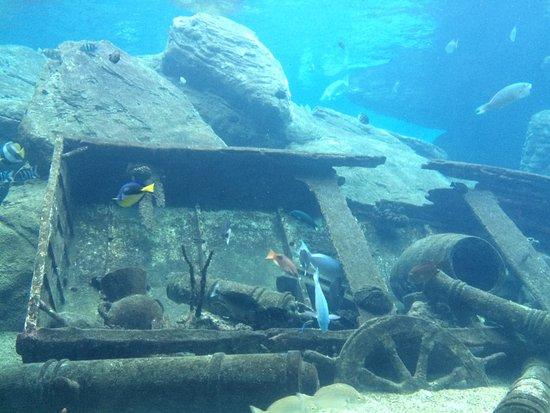 uShaka Marine World: One of the many aquarium exhibits