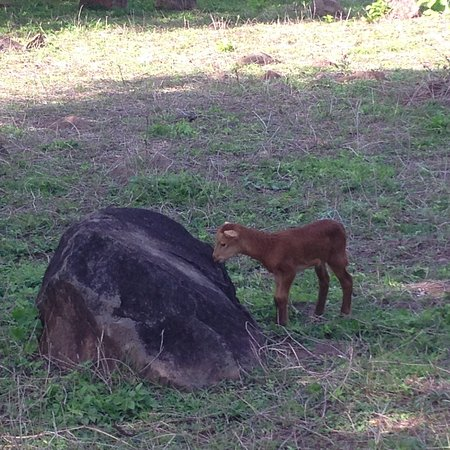 "Finca del Sol: Cute animal they raise on the farm (""finca"")"