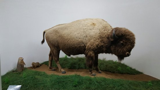 Mammoth Cave Wildlife Museum
