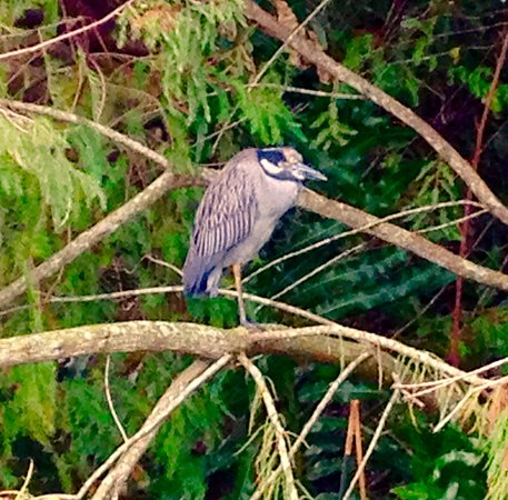 Wakodahatchee Wetlands: Pretty Bird