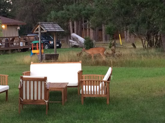 Acorn Lodge: Great place, fun for the kids right in the middle of shopping and the wilderness.