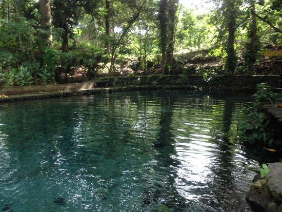 """""""Ojo de Agua"""" is surrounded by wooded area."""