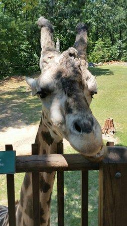 North Carolina Zoo: 20160730_133551_large.jpg
