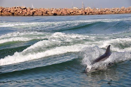 Dolphin Tours Namibia 사진
