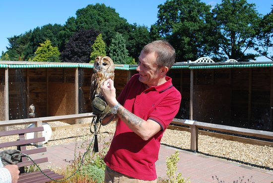 Suffolk Falconry and Hawking