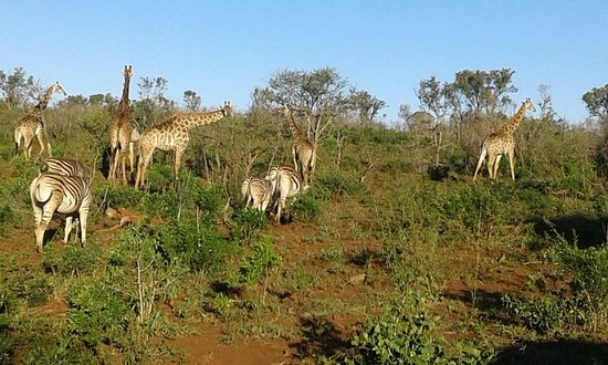 Hluhluwe Backpackers: Great day again in Zululand