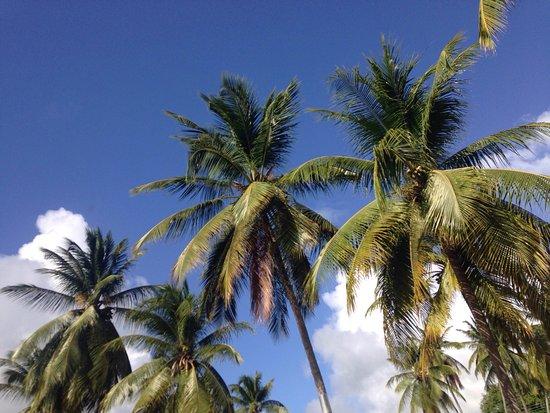 Sunset Crest, Barbados: photo1.jpg