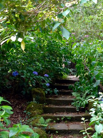 Steps in The Garden of Allah - Picture of Borde Hill Garden ...