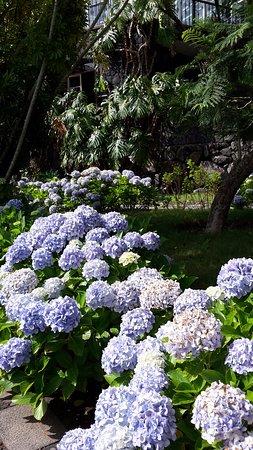 Hotel La Palma Romantica: Hortensias en el jardín del hotel
