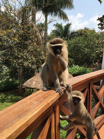Jinja Nile Resort: photo0.jpg