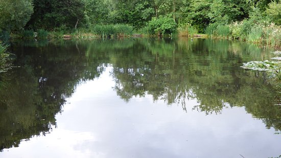 Legge Farm Coarse Fishery