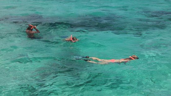 George Town, Gran Caimán: Amazing trip!  Stingray City, Starfish Point, and snorkeling.  Captain Movan and Christen were s