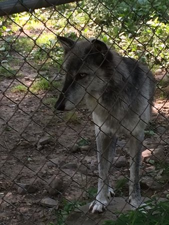 Lakota Wolf Preserve: photo2.jpg