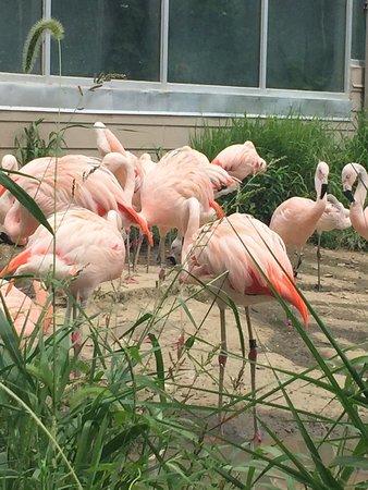 Blank Park Zoo : photo2.jpg