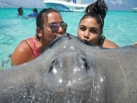 George Town, Gran Caimán: So much fun with the stingrays!