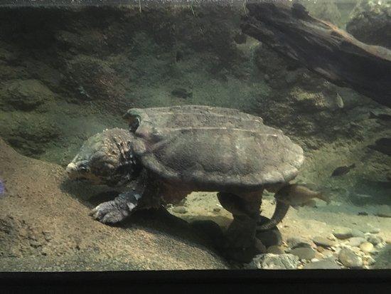 Abilene Zoo: photo6.jpg