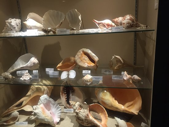 Museum of the Gulf Coast: sea shell collection