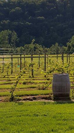 Maiden Rock, WI: The vineyard