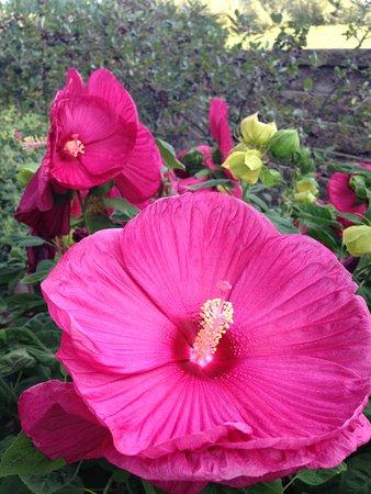 Nebraska City, NE: Flowers just like to show off.