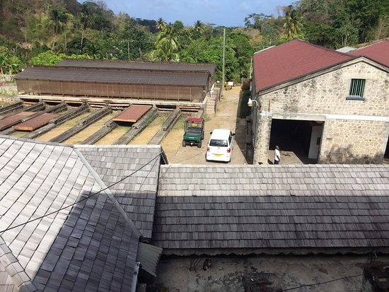 Belmont, Grenada: View from the restaurant. Cocoa beans drying. Notice the cat on the roof!