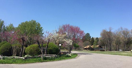 Gaston's White River Resort: photo3.jpg
