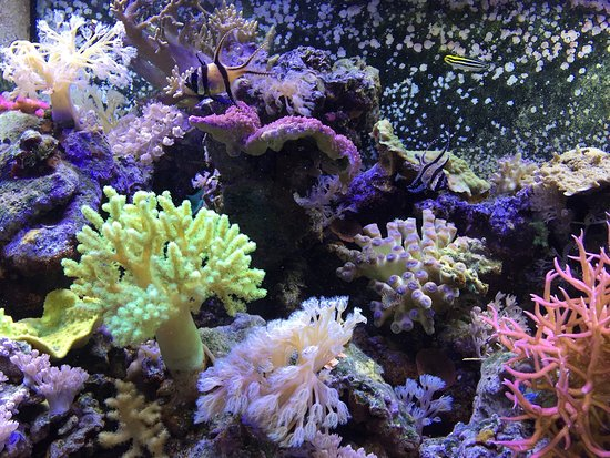 St. Lucie County Aquarium - Smithsonian Marine Ecosystems Exhibit